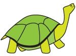 ill-schildpad